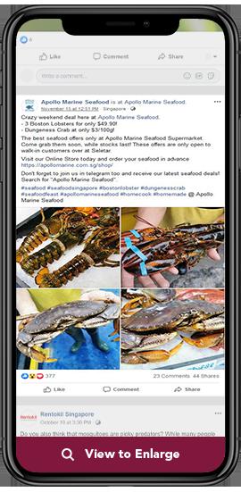 apollo marine seafood ad